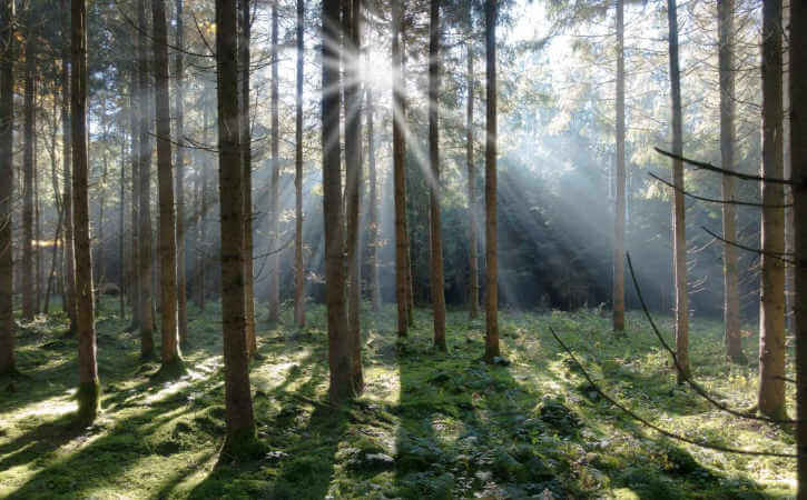 Sunlight streaming through trees in a forrest